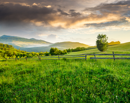 composite rural landscape. fence on the meadow near trees on the hillside. conifer forest on the mountain top in morning light Stock Photo