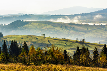 coniferous forest on hillside meadow woth fog over rural  valley in autumn mountains