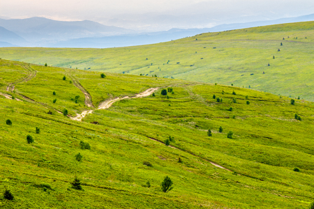 uphill: summer landscape. mountain path through the hillside meadow turns uphill to the sky