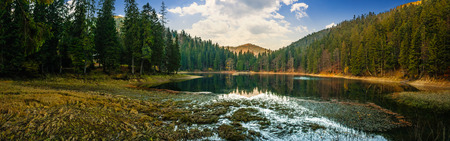 view on crystal clear lake with grassy shore near the pine forest at the foot of the  mountain