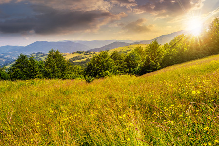 summer counrtyside landscape with tree on meadow in mountains and haystacks on a far green slop in sunset light Stock Photo