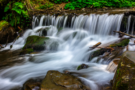 forest stream runs along the ferns, water splashes on the rocks near the cascade