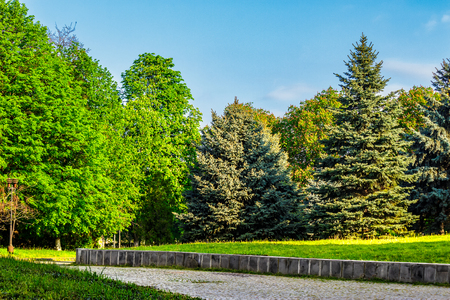 zona di ?? vecchio parco della città con la lanterna vicino al percorso di ciottoli sotto gli alberi di conifere e castagni