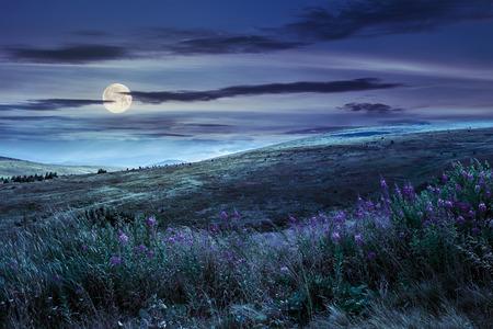 paesaggio con erba alta e viola fiori selvatici sulla parte superiore di alta montagna di notte in luce della luna piena