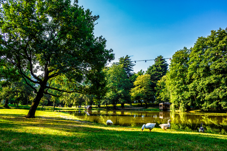 three goose near the pond with gazebo in park at summer morning