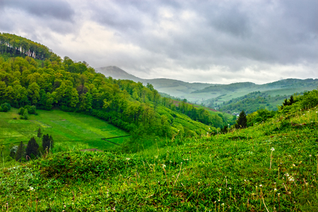 meadow on a hillside near the forest in rural area in summer fog Stock Photo