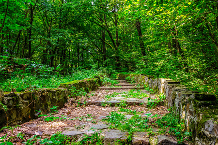 path with steps made ??of stone among the trees in a city park is covered with foliage