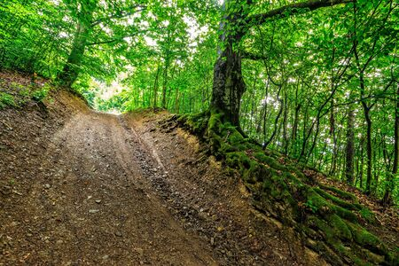 bosk: trail through deep green and  ancient forest