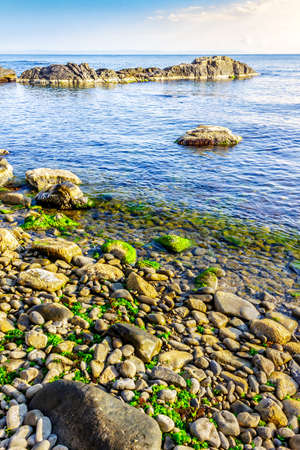 rocky coast with seaweed near the blue sea
