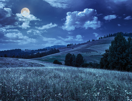 large meadow with mountain herbs and a conifer forest in front of mountainous massif away in the background at night in full moon light