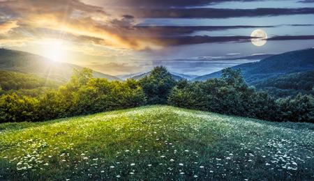 alberi sulla collina della catena montuosa con boschi di conifere e fiori sul prato. composita giorno immagine e la notte con la luna piena