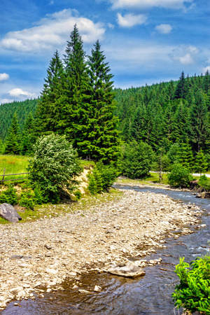 landscape with mountains river in front of conifer forest