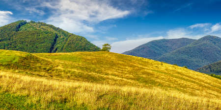 summer counrtyside landscape with lonely tree on meadow in mountains Stock Photo