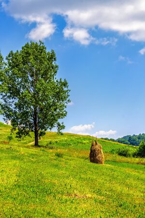 Stack of hay in the mountains on a meadow hill side with tree