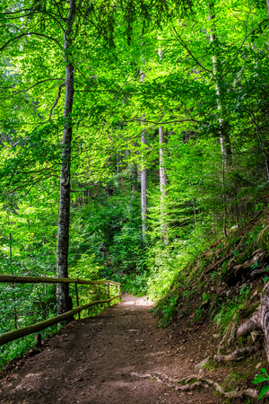 narrow path in a forest. small wooden fence near the slope of the path. tree roots have sprouted across the footpath.