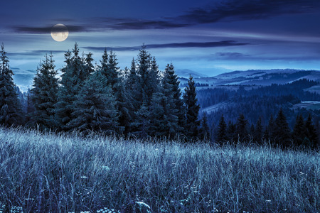 large meadow with mountain herbs and a conifer forest in front of mountainous massif away in the background at night in full moon light Stock Photo - 59685922