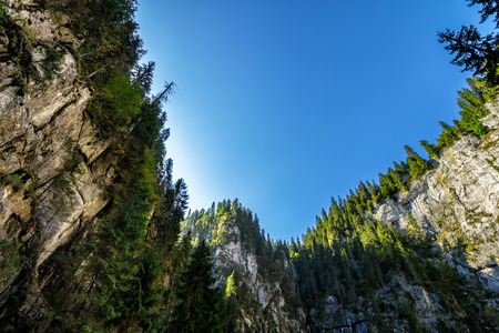 Canyon in romanian mountains with spruce forest on top Stock Photo