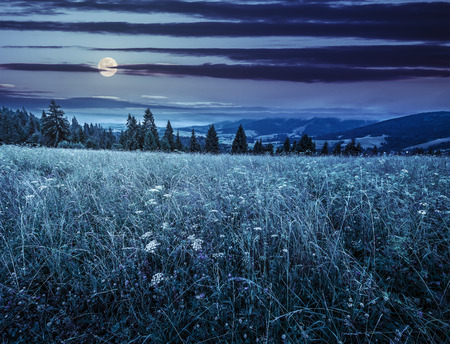 large meadow with mountain herbs and a conifer forest in front of mountainous massif away in the background at night in full moon light Stock Photo - 59685938