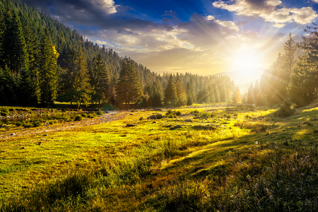 slope of mountain range with coniferous forest on a meadow in evening light Stock Photo