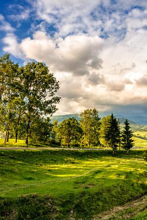 few trees on a hill side meadow near the mountain asphalt road