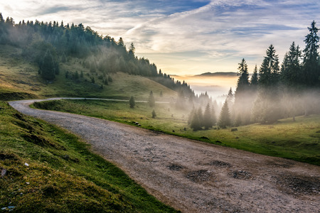road through the foggy meadow near spruce forest in mountains