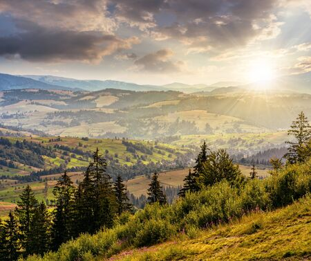 hillside: Classic Carpathian mountains landscape in summer. Spruce forest on the edge of hillside over the valley panoramic view in evening light