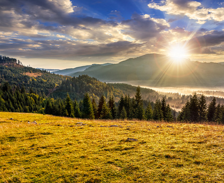 foggy hill: spruce forest on a meadow down the hill in foggy mountains of Romania Stock Photo