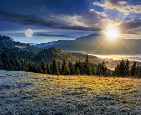 Vuren bos op een weide onderaan de heuvel in mistige bergen van Roemenië Stockfoto - 61105251