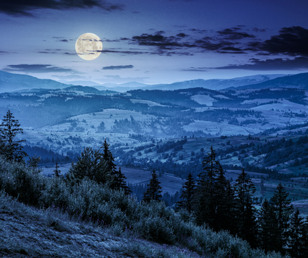 Classic Carpathian mountains landscape in summer. Spruce forest on the edge of hillside over the valley panoramic view at night in full moon light