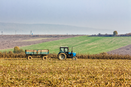 corn stalks: Mukachevo, Ukraine - November 6 2015: tractor in the field among the corn stalks in late fall  haze day