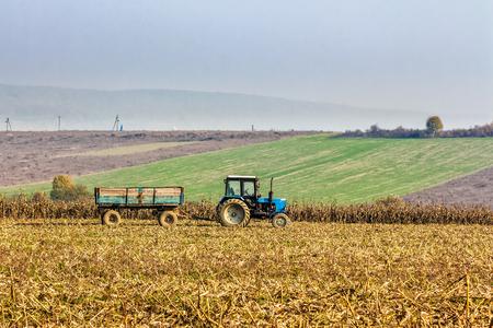 Mukachevo, Ukraine - November 6 2015: tractor in the field among the corn stalks in late fall  haze day