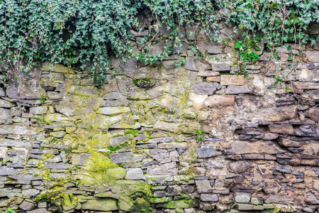 massive wall of cut stone on which the green ivy grows Stock Photo