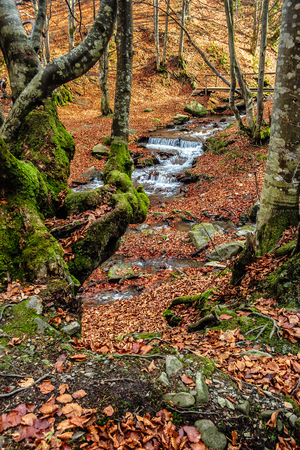 Mountain stream with cascade flows among the stones through autumn forest with some moss on the trees and orange foliage on the ground Stock Photo - 62995793
