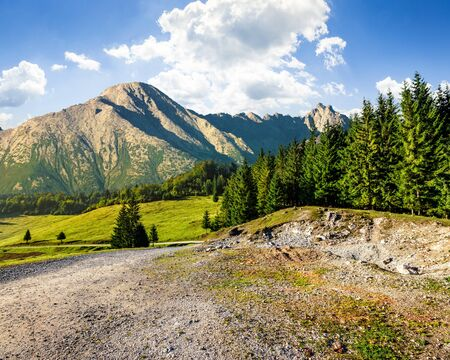rocky peak: road through spruce forest to mountains with high rocky peak Stock Photo