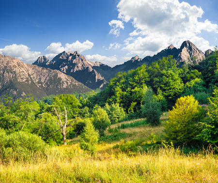 composite landscape. meadow with green grass in mountains near the forest in morning light Stock Photo