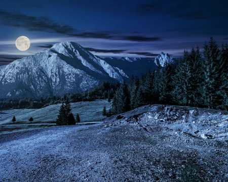 road through spruce forest to mountains with high rocky peak at night in full moon light