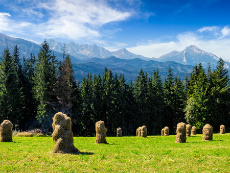 haystack near spruce forest on a meadow  in Zakopane of Poland side of Tatra mountains