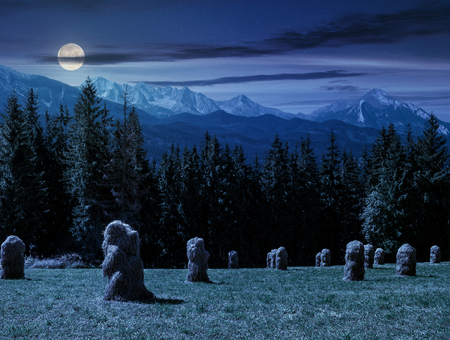 summer trees: haystack near spruce forest on a meadow  in Zakopane of Poland side of Tatra mountains at night in full moon light