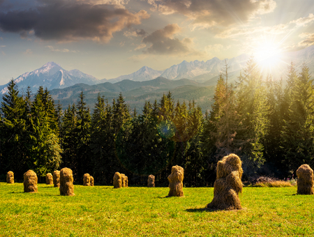 Spruce forest on a meadow  in Zakopane of Poland side of Tatra mountains in evening light