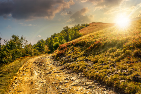 road on hillside meadow in mountains. forest  on sides of the road in evening light Stock Photo