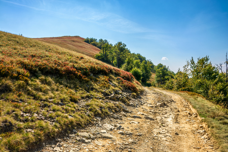road on hillside meadow in mountains. forest  on sides of the road in morning light Stock Photo