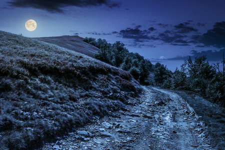 road on hillside meadow in mountains. forest  on sides of the road at night in full moon light