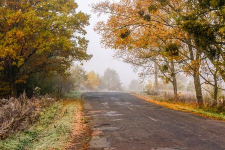 road through the foggy meadow near autumn forest