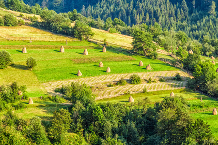 haystacks on rural hillside meadow near the forest Stock Photo