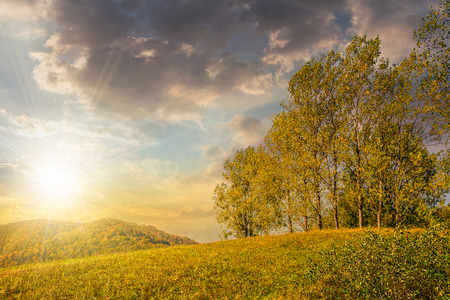 few trees on meadow on  hillside near forest in early autumn in evening light Stock Photo