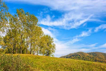 few trees on meadow on  hillside near forest in early autumn Stock Photo