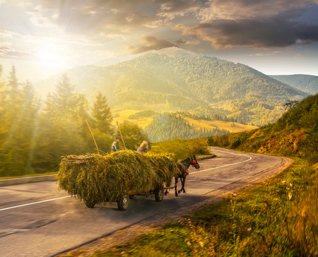 cart with hay on the way to mountainous rural area through the spruce forest in Carpathians in evening light Stock Photo