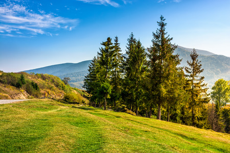 Classic Carpathian Mountains landscape in early autumn. Spruce forest on the edge of hillside over the valley by the road at the foot of the mountain