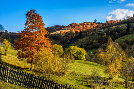 Carpathian rural area in autumn. red tree  behind the fence on hillside at the foot of the mountain Stock Photo