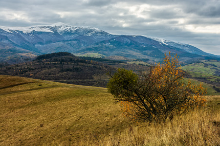 high mountains snowy peaks over meadow with yellow grass and bush on cloudy autumn day Stock Photo